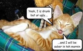 Happy Catoberfest!