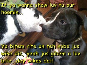 If ya wanna show luv tu our hoomin..  Ya bitem rite on teh nobe jus wike dis, yeah jus gibem a luv bite..dey wikes dat!