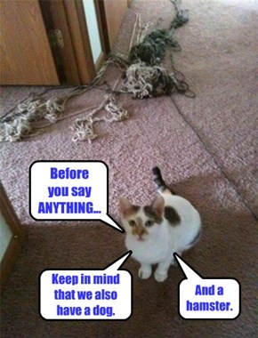 Pawsible Deniability