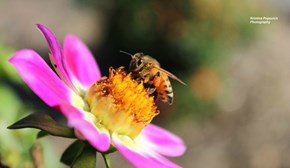 Bee on a Flower