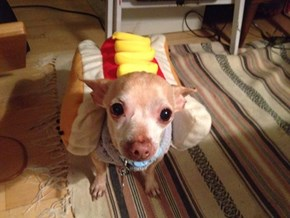 That's One Happy Hot Dog
