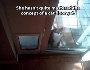 She's Mastered the Face that Gets you to Open the Door
