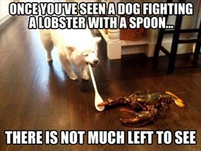 Dog Won the Fight and the Lobster was Delicious...WIn-Win!