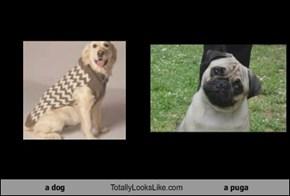 a dog Totally Looks Like a puga