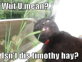 Wut U mean?  Isn't dis timothy hay?
