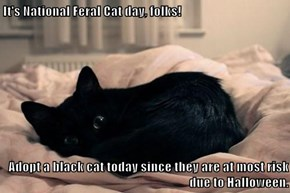 It's National Feral Cat day, folks!   Adopt a black cat today since they are at most risk due to Halloween.
