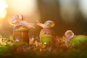 Snail Acorn Trio