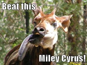 Beat this  Miley Cyrus!