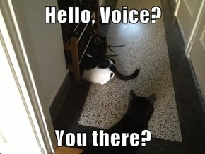 Hello, Voice?  You there?
