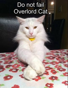 Do not fail  Overlord Cat