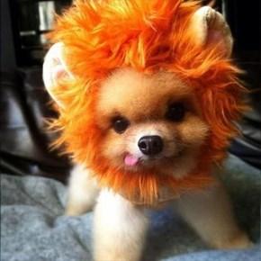 I is a Lion!  Rawr!