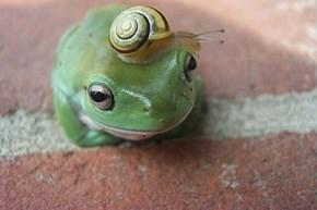 Hop to it, Froggie!