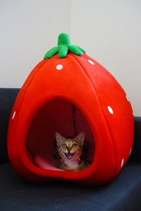 Strawberry Kitties Forever