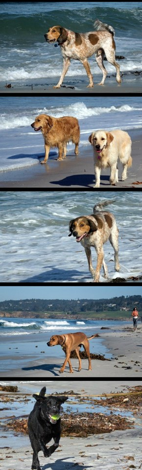 The Dogs of Carmel Beach part two