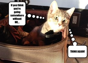 Kitteh KNOWS When You Have Travel Plans