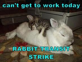 can't get to work today  RABBIT TRANSIT STRIKE