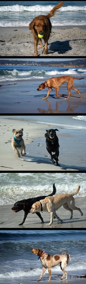 The Dogs of Carmel Beach part one