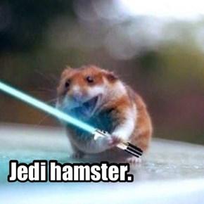 Tiny Jedi.