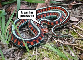 Garter Snake is friendlier than you might experct.