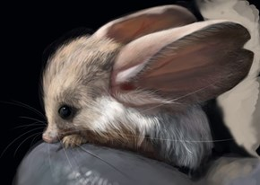 One More Example of Why Big Ears are Cute