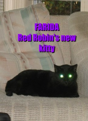 FARIDA Red Robin's new kitty