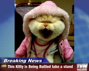 Breaking News - This Kitty is Being Bullied take a stand