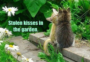 Stolen kisses in the garden.