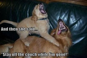 "And then she said... ""Stay off the couch while I'm gone!"""