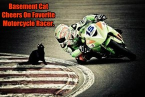 Basement Cat Cheers On Favorite Motorcycle Racer.