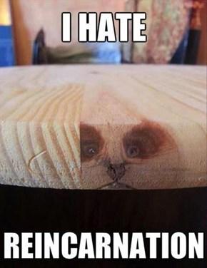 Grumpy Reincarnation
