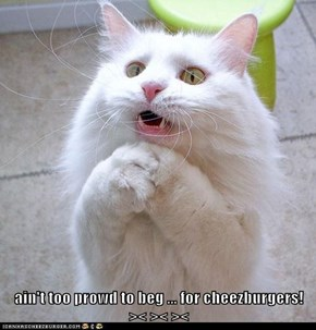 ain't too prowd to beg ... for cheezburgers!      >< >< ><