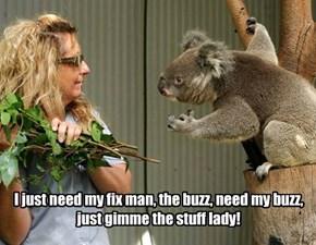 When Koalas start jonesing