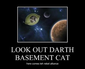LOOK OUT DARTH BASEMENT CAT