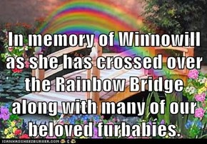 In memory of Winnowill as she has crossed over the Rainbow Bridge along with many of our beloved furbabies.