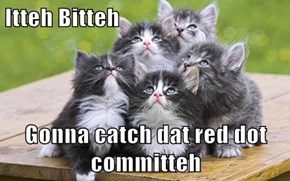 Itteh Bitteh  Gonna catch dat red dot committeh