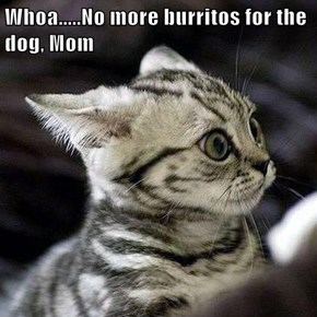 Whoa.....No more burritos for the dog, Mom