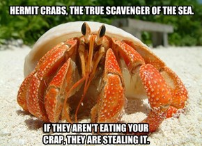 HERMIT CRABS, THE TRUE SCAVENGER OF THE SEA.