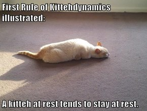 First Rule of Kittehdynamics illustrated:  A kitteh at rest tends to stay at rest.