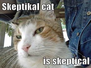 Skeptikal cat  is skeptical
