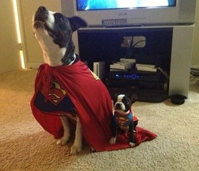 The Evolution of Super Dog