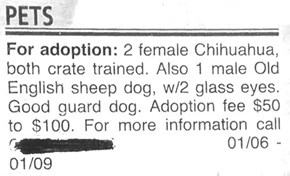 Seems Like a Fantastic Guard Dog