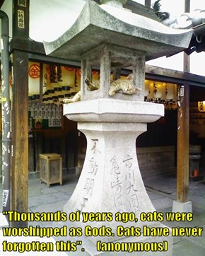 """""""Thousands of years ago, cats were worshipped as Gods. Cats have never forgotten this"""".     (anonymous)"""