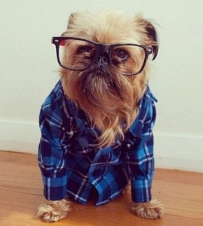Where Can I Buy This Tiny Hipster Chewbacca?