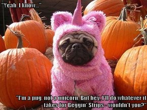 """Yeah, I know...""  ""I'm a pug, not a unicorn. But hey, I'll do whatever it takes for Beggin' Strips - wouldn't you?"""