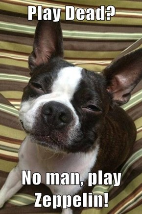 Play Dead?  No man, play Zeppelin!