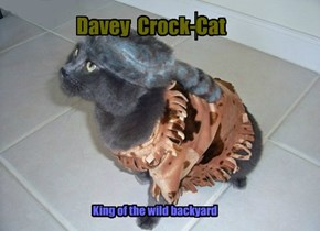 Davey  Crock-Cat