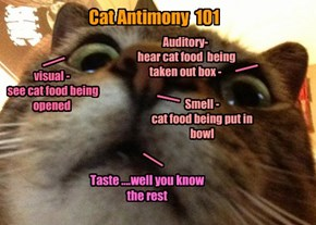 Cat Antimony  101