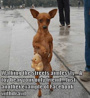 Walking the streets aimlessly....A toy bear your only friend....Just another example of Facebook withdrawl