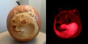 Wow. Such Pumpkin.