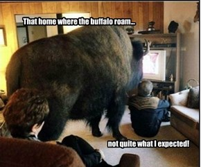 That home where the buffalo roam...